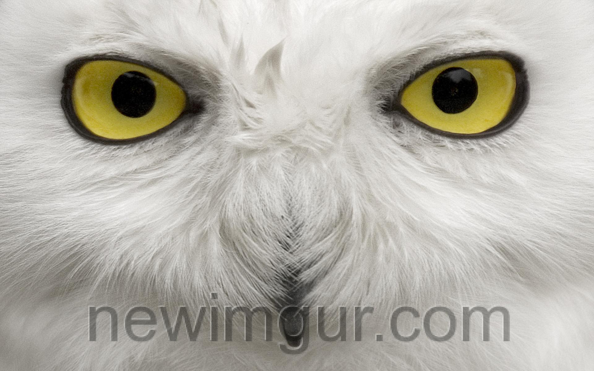 www.newimgur.com.jpg